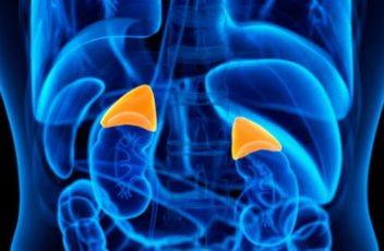artificial adrenal gland nutrigenomics institute