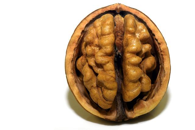 brain's health